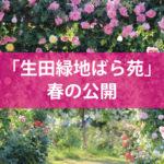 「生田緑地ばら苑」春の公開