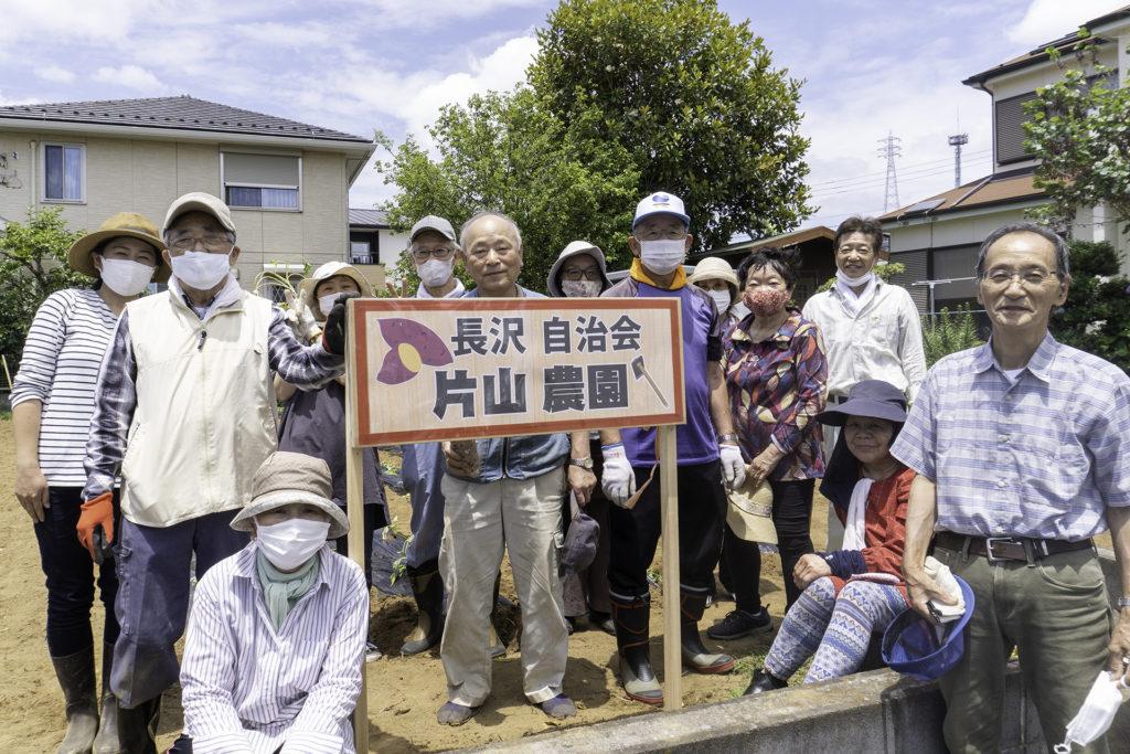 川崎市長沢自治会-サツマイモの植え付け